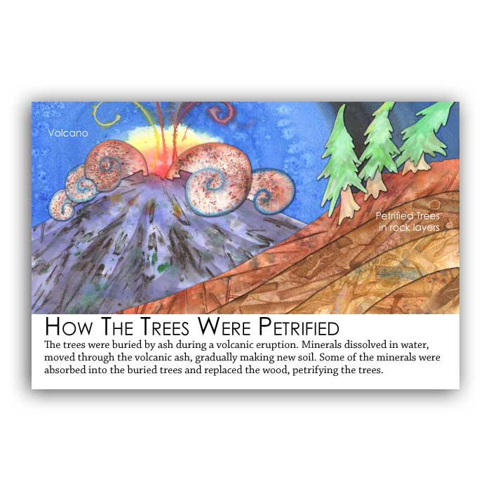 fossil tree formation postcard