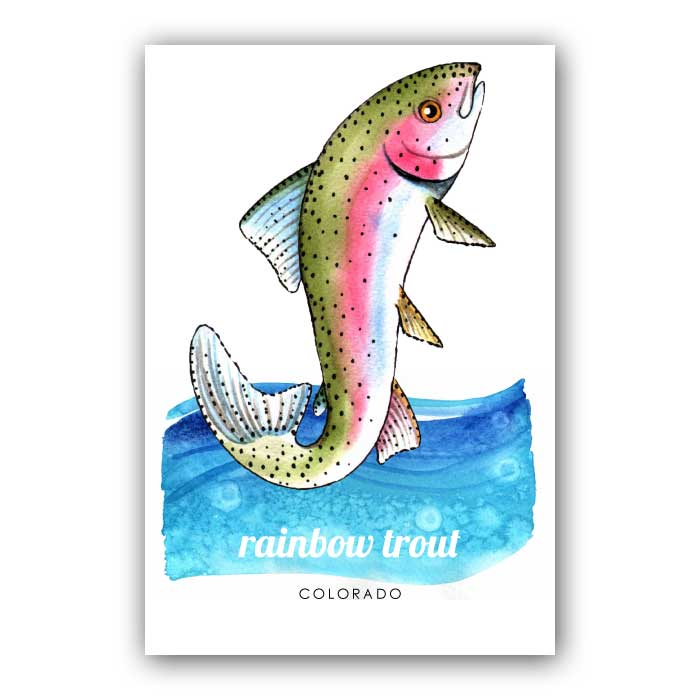 Rainbow Trout - Postcard