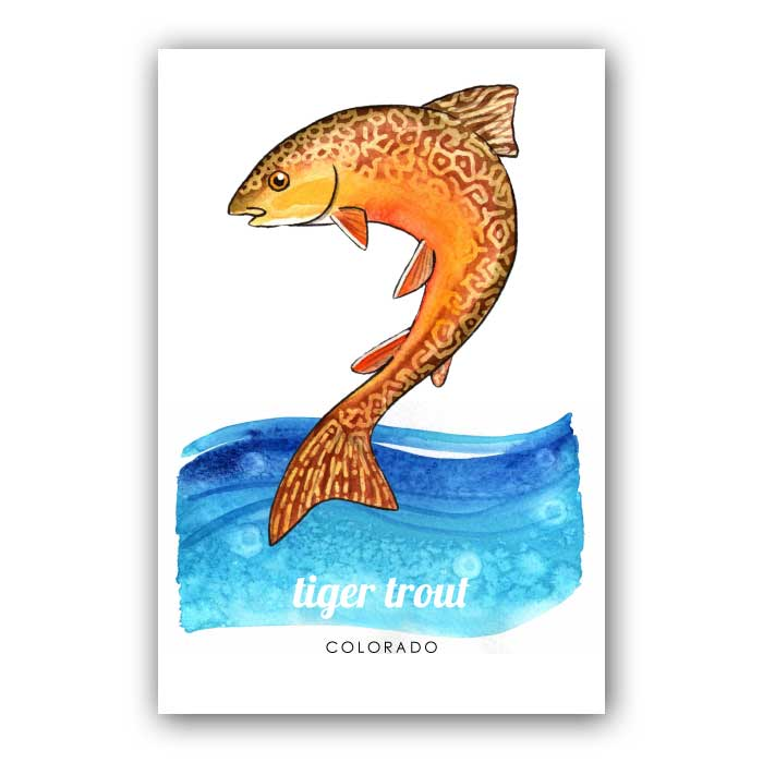 Tiger Trout - Postcard
