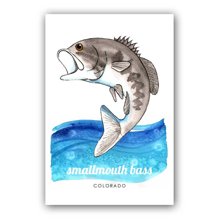 Smallmouth Bass - Postcard