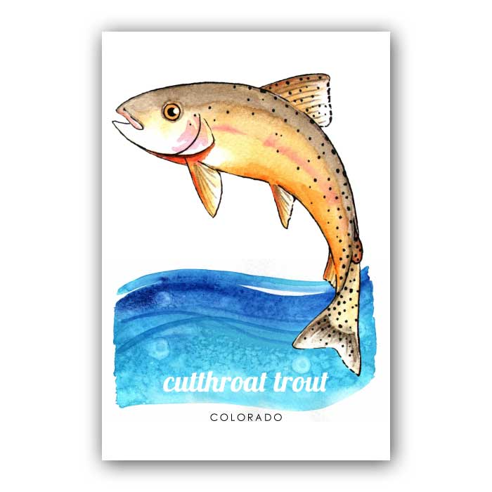 Cutthroat Trout Postcard