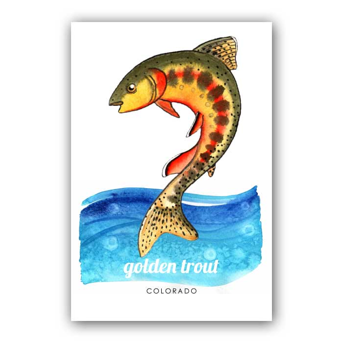 Golden Trout Postcard