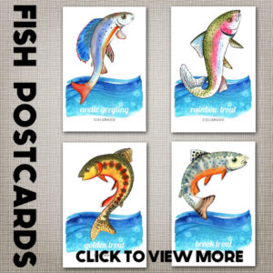 Trout Postcards